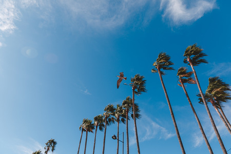 bottom view of palm trees and flying seagull against blue sky, Cannes, France
