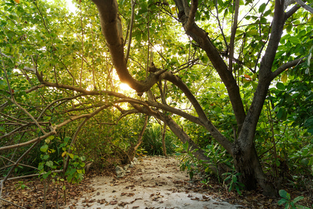 beautiful scenic view of sunlight and trees with green foliage, maldives, thoddoo Stok Fotoğraf