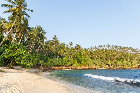 beautiful scenic view of coastline with palm trees, sri lanka, mirissa