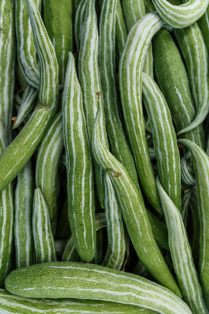 close up view of pile of green cucumbers