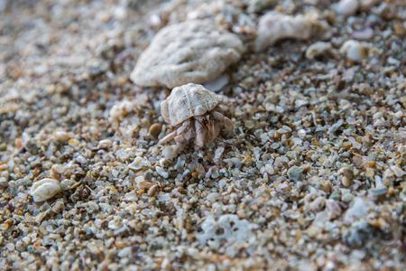 close up view of crab on rocky beach, sri lanka, mirissa Stock Photo