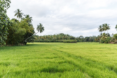 beautiful scenic view of empty filed with green grass and various trees, sri lanka, mirissa