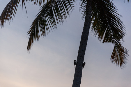 beautiful scenic view of birds sitting on palm tree at sunset, sri lanka, galle fort