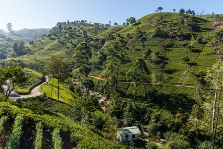 Scenic view of building on hill covered with tea plantations, sri lanka, nuwara eliya