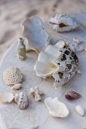 close up view of arranged various seashells on surface