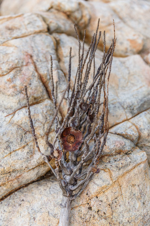 close up view of beautiful twig lying on rocks