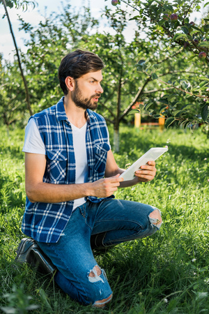 handsome farmer squatting, holding tablet in apple garden at farm and looking away Imagens