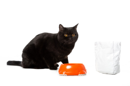 cute black british shorthair cat sitting near bowl with food isolated on white background Standard-Bild - 110527268