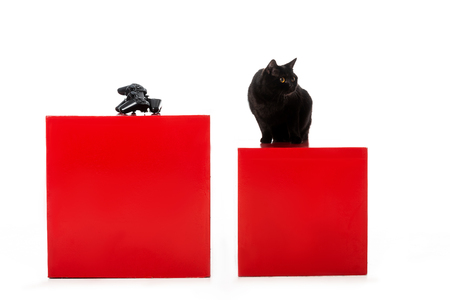 black british shorthaircat sitting on red cube near joystick for video game isolated on white background