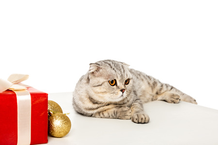 adorable striped british shorthair looking away near golden christmas baubles and gift box wrapped by ribbon on cube isolated on white background Standard-Bild - 111946036