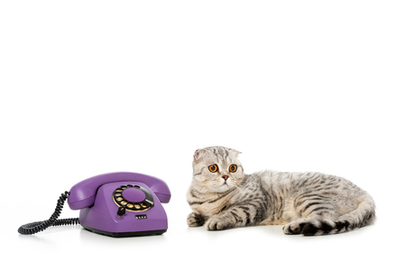studio shot of cute striped british shorthair cat laying near telephone isolated on white background Standard-Bild - 110963368