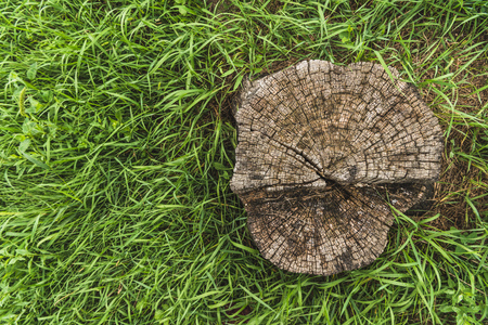 top view of stump surrounded with green grass