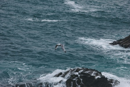 dramatic shot of seagull flying above ocean waves crashing on rocks for background Stock fotó