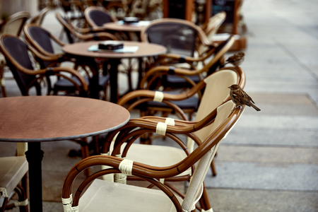 sparrow sitting on chair of street cafe in Dresden, Germany