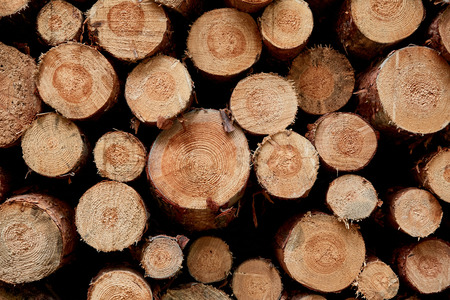 brown cut tree trunks on pile for firewood