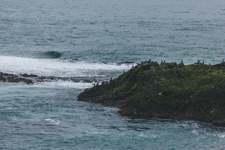 aerial view of large group of seagulls perching on rocky coast of ocean Banco de Imagens