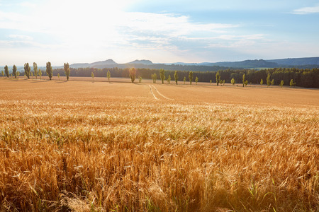 agricultural field with harvest and hills on background in Bad Schandau, Germany Stock Photo