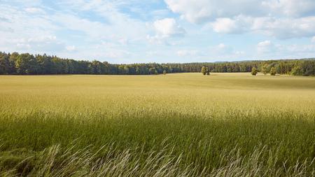 green grass on field, trees and blue sky in Bad Schandau, Germany Standard-Bild