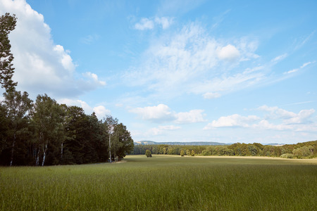 green grass on field, trees and blue sky in Bad Schandau, Germany