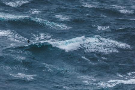 dramatic shot of bird flying over wavy blue ocean 写真素材