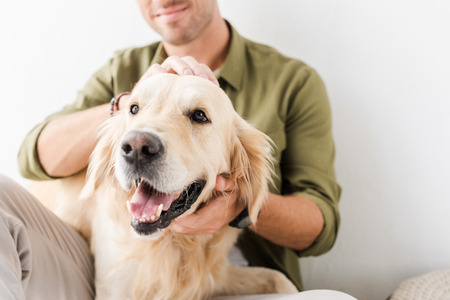 cropped view of man stroking golden retriever dog
