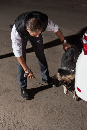 policeman in bulletproof vest with german shepherd on leash near car at street Stock Photo