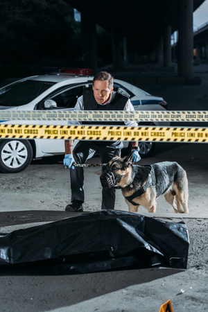 male police officer with alsatian on leash at crime scene with corpse in body bag Stock Photo