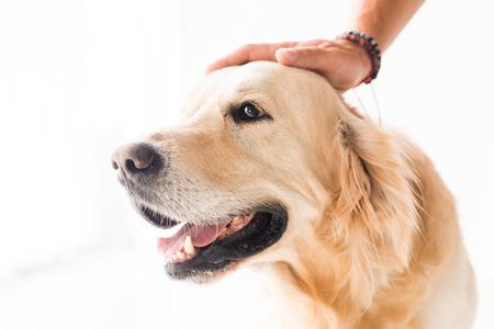cropped view of man stroking cute golden retriever dog Фото со стока