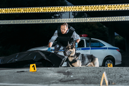 middle aged policeman holding german shepherd on leash at crime scene with corpse in body bag