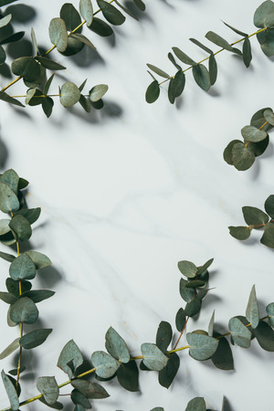 top view of eucalyptus leaves on white background Foto de archivo