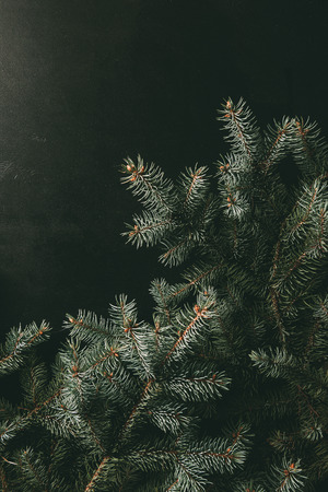 green fir branches on black background