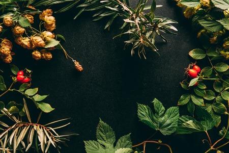 flat lay with autumn plants arrangement on black background