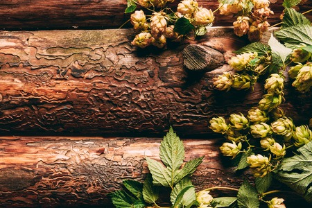 top view of hops with green leaves on wooden background
