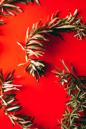 full frame of common sea buckthorn branches arranged on red background