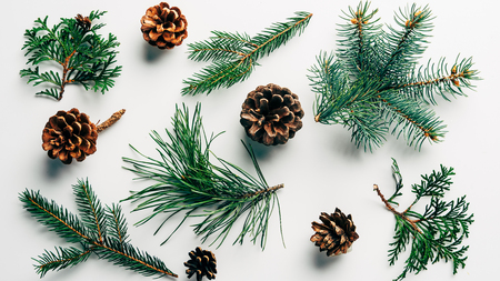flat lay with green branches and pine cones arranged on white backdrop