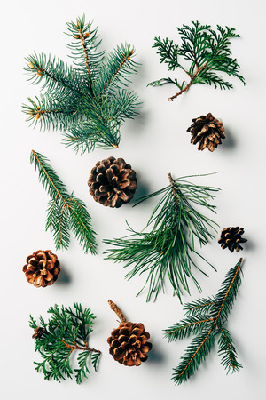 flat lay with green branches and pine cones arranged on white backdrop Imagens