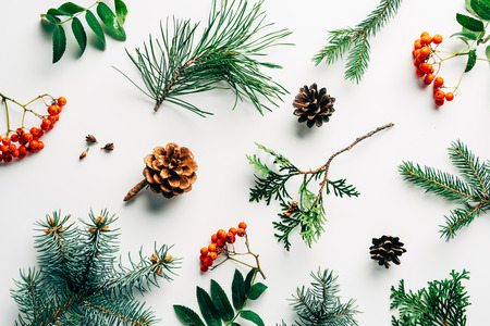flat lay with winter arrangement of pine tree branches, cones and sea buckthorn on white backdrop Фото со стока