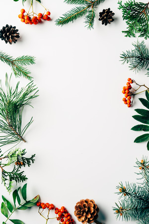 flat lay with winter arrangement of pine tree branches, cones and sea buckthorn on white backdrop Stock Photo