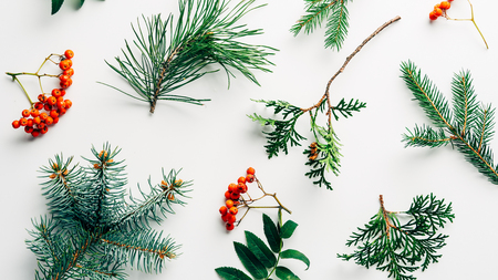 mise à plat avec arrangement hivernal de branches de pin et d'argousier sur fond blanc Banque d'images
