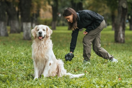 young woman cleaning after golden retriever dog in park Banque d'images - 110669735