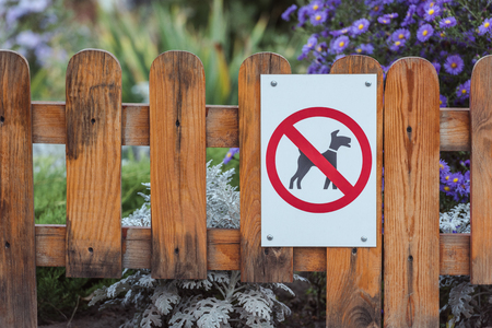 close-up view of dog forbidden sign on wooden fence in park Banque d'images - 110669876
