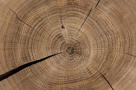 Circular sawed wood detailed background 写真素材