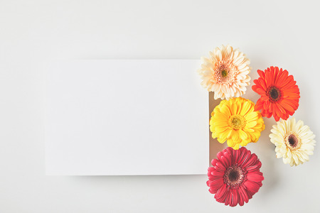 Top view of blank card and beautiful tender gerbera flowers on grey background Banco de Imagens