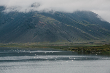 Beautiful Icelandic landscape with mountains in fog and swans floating on water, eastern Iceland Фото со стока