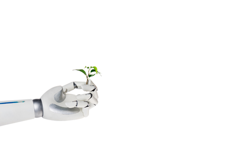 Cropped shot of robot holding branch of green plant isolated on white background