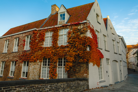 Narrows street with beautiful old buildings and ivy on wall, Brugge, Belgium