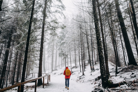 Back view of person walking in beautiful winter mountain forest, Germany