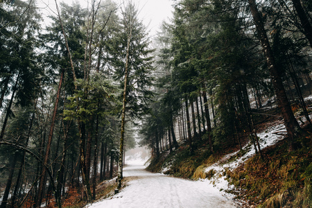 Empty mountain road and evergreen trees in beautiful winter mountains, Fussen, Germany