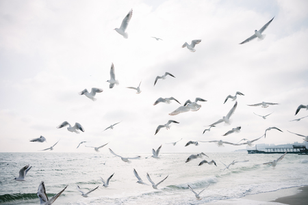 Seagulls flying in cloudy sky over sea shore Banque d'images