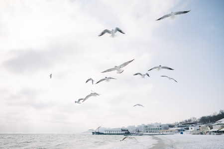 Seagulls flying in cloudy sky over sea shore, with city behind